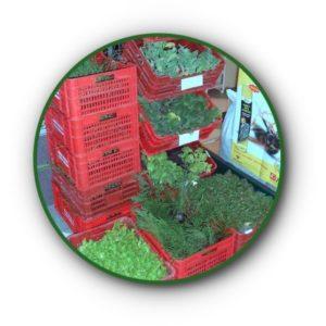 Planta Agrícola, Árboles, Abonos y Sustratos